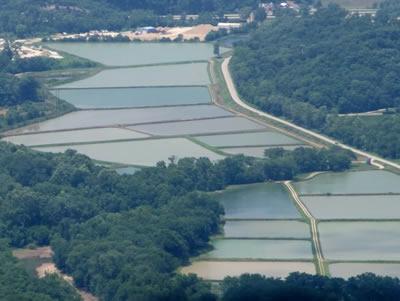 Osage catfisheries inc pond stockin for Zetts fish farm